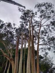 Podas e cortes de árvores de Alta periculosidade