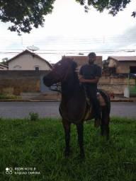 Vende- se cavalo mangalarga machador marcha batida