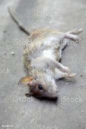 Veneno para matar ratos