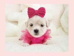 *Filhotinha bela de lhasa fêmea aqui no Namu Royal Pet Store*