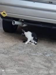 Gato macho filhote