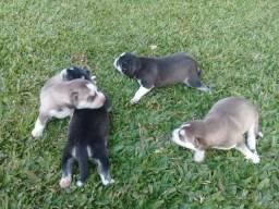Barbada !!!!Husky Siberianos
