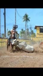 Vendo ou Troco Cavalo com Registro - QM