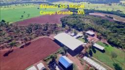 Estância Leitera, tecnologia de ponta. Campo Grande MS