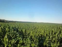 Fazenda Agrícola Palmeira-PR
