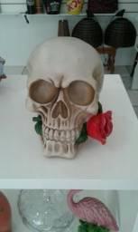 Cranio em resina