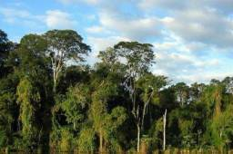 480 Hectares, Mata Raleada,Pecuária e lavoura, Analândia,União do Sul,Marcelândia-MT