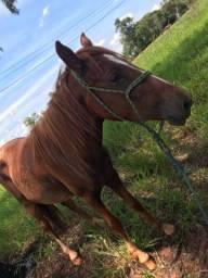 Troko 2 égua né algo do meu enterece