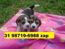 Canil Filhotes Cães Maravilhosos Beagle Yorkshire Poodle Lhasa Maltês Shihtzu