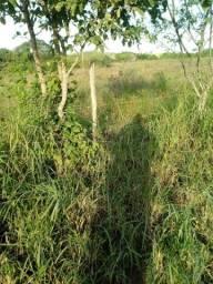 40 80 ou 120 hectares em Passira