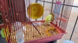 Camundongos/rato de laboratório