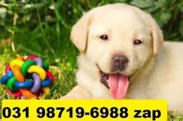 Canil Filhotes Cães Selecionados BH Labrador Pastor Akita Rottweiler Dálmatas Golden