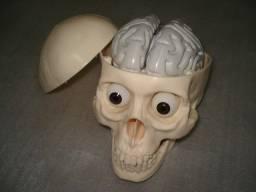Cranio Humano em PVC