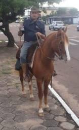 Cavalo gatiado