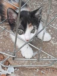 Doação de lindos gatinhos em Anápolis-Go