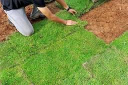 Manutenção jardinagem