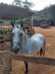 Potra - Égua - cavalos