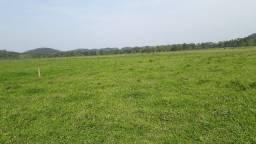 Fazenda 32 alqueires Plana (Willian Ricardo)
