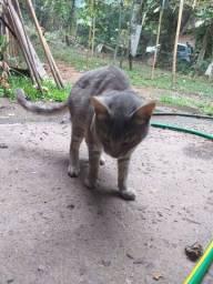 Gatinhos em busca de um lar