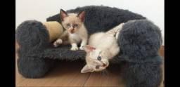 Arranhador sofá para gato