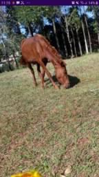 Égua Boa