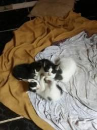 Gatos pra doaçao docil