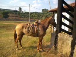 Cavalo pronto para serviço