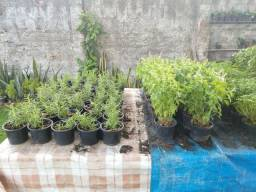 AgroFAP - Floricultura