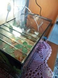 Aquaterrário impecavel