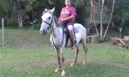 Égua mansa de sela e de charrete