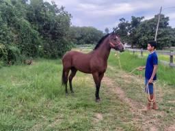 Cavalo top Pra quem gosta de qualidade