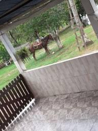 Vendese um cavalo e uma egua