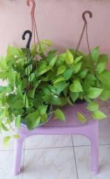 Plantas ornamentais.