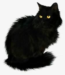 Troco filhote de husky siberiano por um gato persa preto