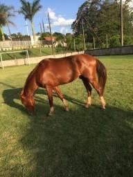 Vende-se cavalo
