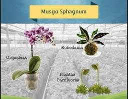Musgo sphagnum 250g