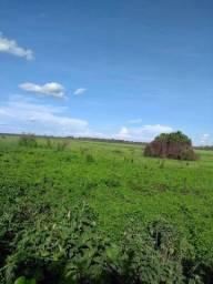 Belíssima Fazenda de 1.560 hectares na Beira do Rio Paraguai Pantanal Mato Grosso do Sul