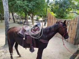Égua  mangalarga paulista
