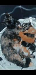 Adote filhotes de gato