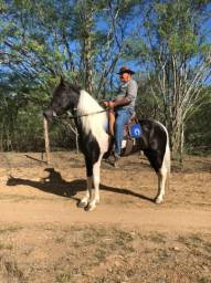 Venda Cavalo