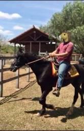 Cavalo Mangalarga Marchador - Marcha Batida- Cor Preta - Castrado