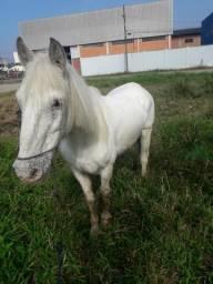 Vendo Cavalo Petiço