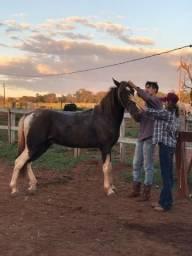 Cavalo pra vender rapido