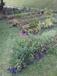Flora manancial