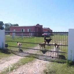Sítio à venda com 2 dormitórios em Zona rural, Jaguarão cod:10164