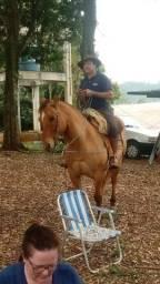 Vendo cavalo muito manso quem procura um animal bom pra laçar esse cavalo e ideal