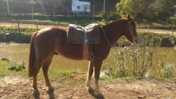 Cavalo manso com documento