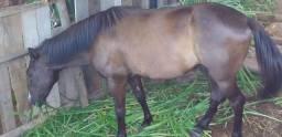 Vendo 2 cavalos 1 égua  1 cavalo