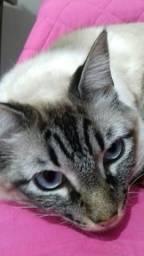 Doação gato