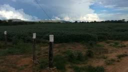Fazenda para agricultura e pecuaria 80alqueires